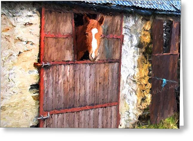 Tin Roof Mixed Media Greeting Cards - Irish Mare Greeting Card by Gary Guthrie