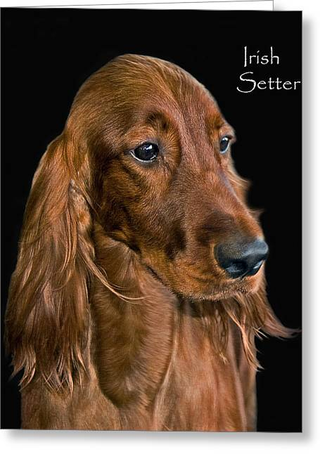 Bred Photographs Greeting Cards - Irish Setter Greeting Card by Larry Linton