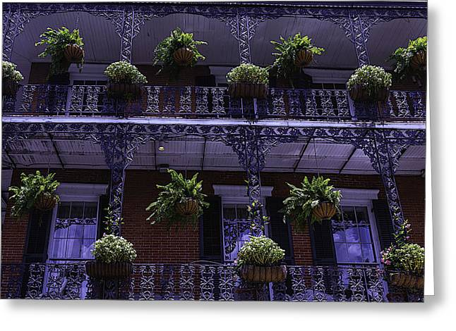 House Work Greeting Cards - Iron Railings And plants Greeting Card by Garry Gay