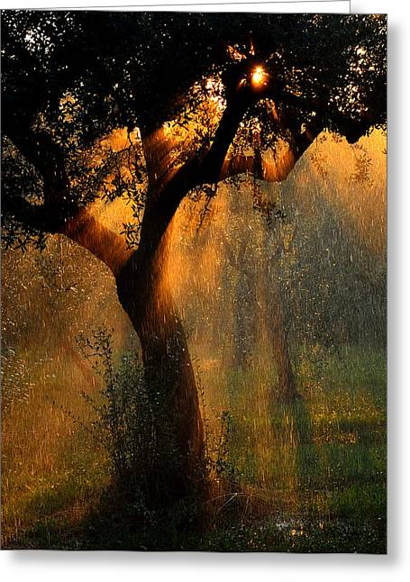 Olives Photographs Greeting Cards - Irrigation Greeting Card by Stefano Castoldi