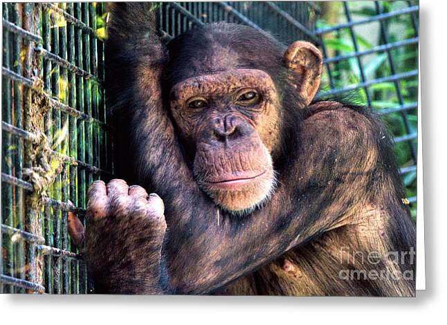 Is It Friday Yet? Greeting Card by A New Focus Photography