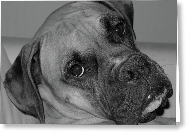 Boxer Digital Greeting Cards - Is This Necessary Greeting Card by DigiArt Diaries by Vicky B Fuller