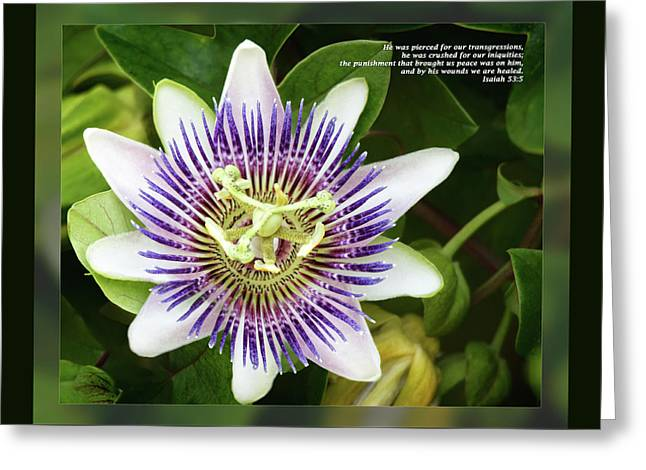 On His Holidays Greeting Cards - Isaiah 53 5 Greeting Card by Dawn Currie