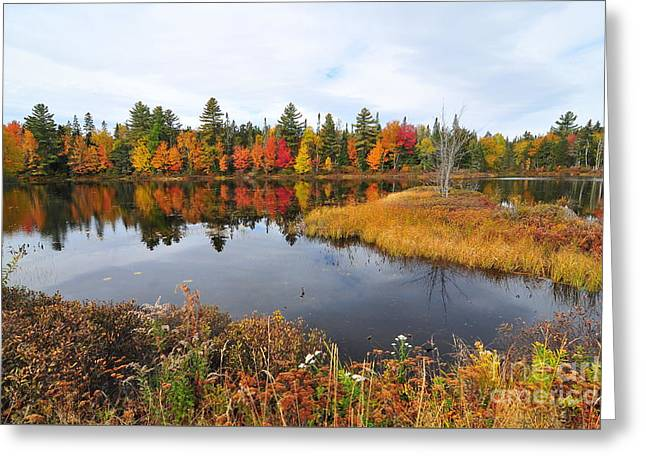 Island Brook  Greeting Card by Catherine Reusch  Daley