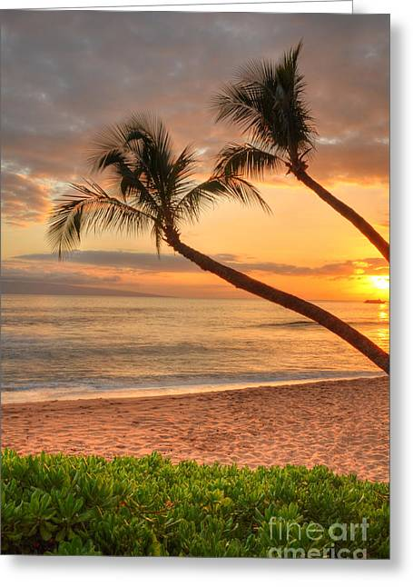 Tropical Greeting Cards - Island Palms Greeting Card by Kelly Wade