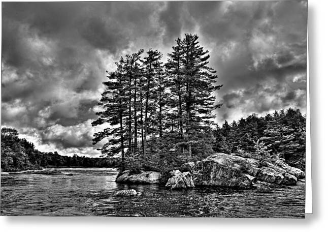 White River Greeting Cards - Island Pines on the Moose River Greeting Card by David Patterson