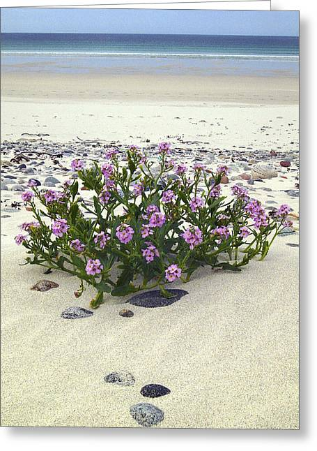 Western Isles Greeting Cards - Isle of Vatersay Bagh Siar Greeting Card by John McKinlay