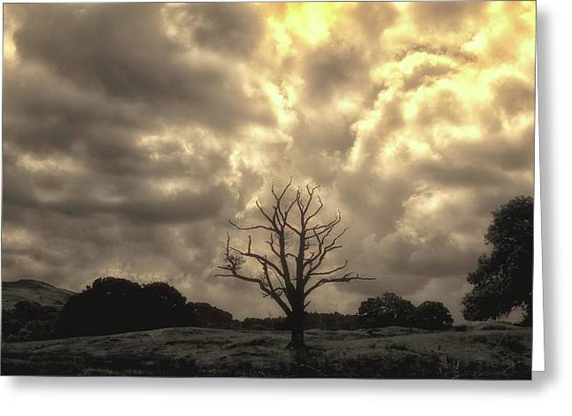 Isolated Greeting Card by Martin Newman