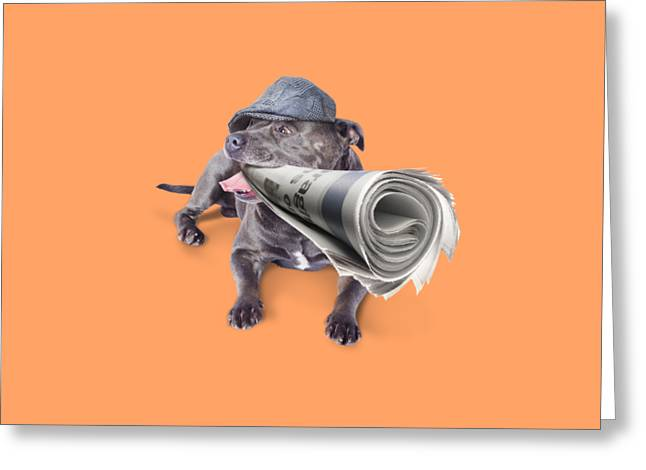 Isolated Newspaper Dog Carrying Latest News Greeting Card by Jorgo Photography - Wall Art Gallery