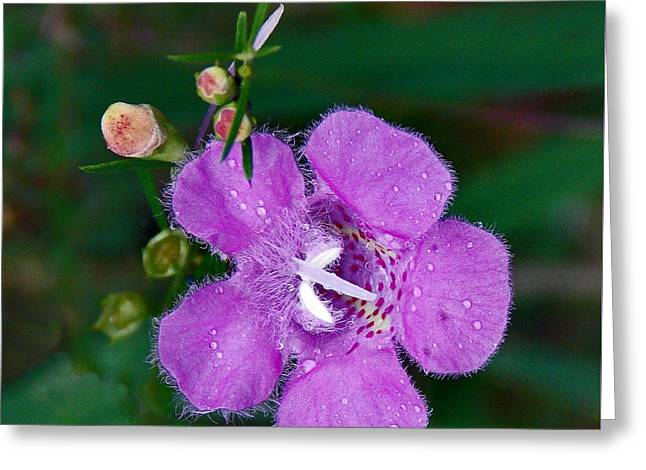 Isolated Wild Greeting Card by Skip Willits