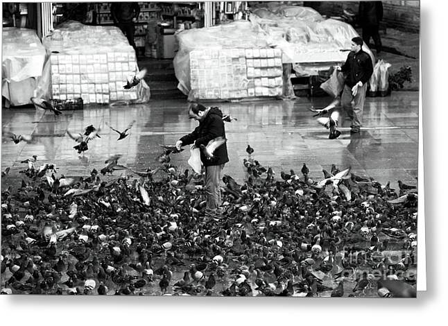 Istanbul Greeting Cards - Istanbul Pigeon Man Greeting Card by John Rizzuto