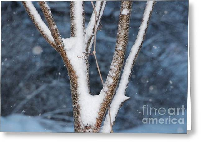 Wintry Greeting Cards - It is Cold Outside Greeting Card by Jari Hawk