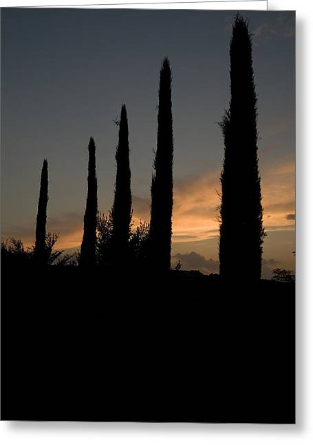 Chianti Greeting Cards - Italian Cypress Trees Silhouetted Greeting Card by Todd Gipstein