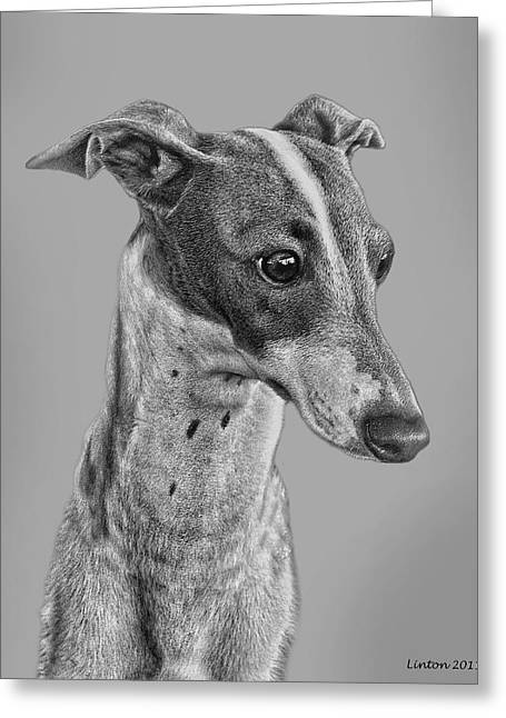 Italian Grayhound 2 Greeting Card by Larry Linton