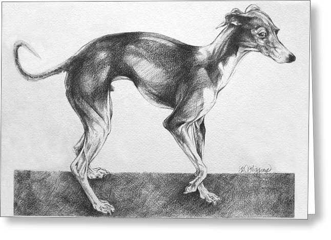 Toy Dog Drawings Greeting Cards - Italian Greyhound Greeting Card by Derrick Higgins