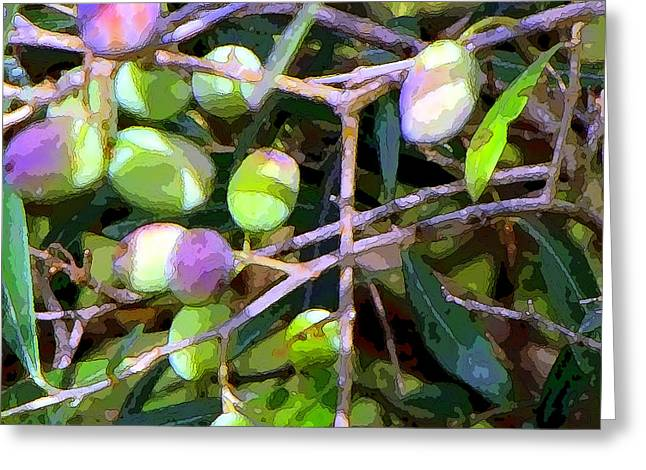 Fruit Tree Art Greeting Cards - Italian Olives Greeting Card by Mindy Newman