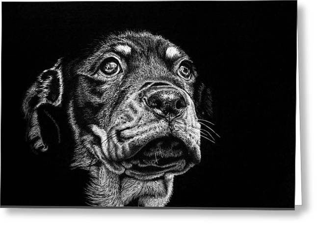 Puppies Drawings Greeting Cards - Its a big world out there Greeting Card by Jill Dimond