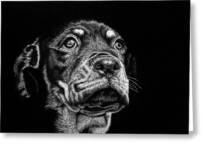 Pen And Ink Drawing Greeting Cards - Its a big world out there Greeting Card by Jill Dimond