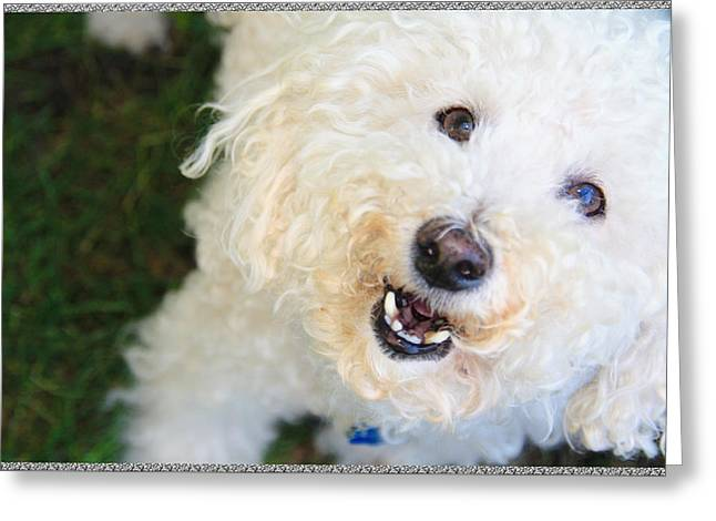 Best Friend Greeting Cards - Its A Dogs Life Greeting Card by Terry Wallace