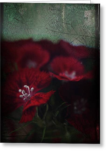 Stamen Greeting Cards - Its a Heartache Greeting Card by Laurie Search