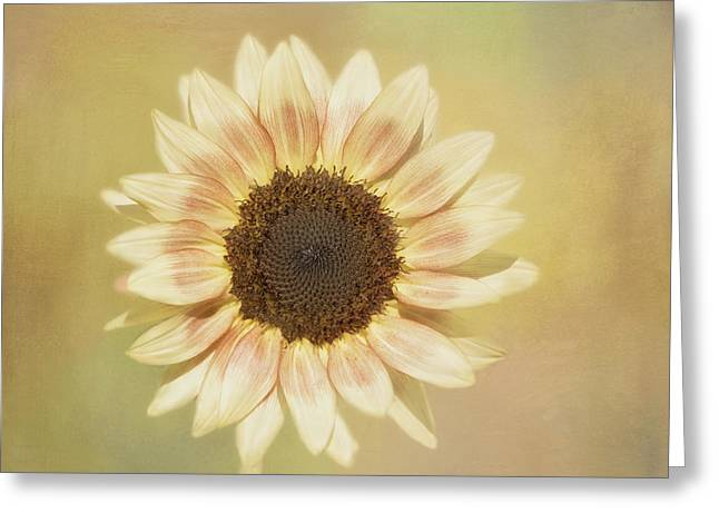 Yellow Sunflower Greeting Cards - Its A Sunshine Day Greeting Card by Kim Hojnacki