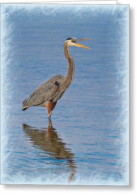 Water Fowl Greeting Cards - Its All Good Greeting Card by John Bailey