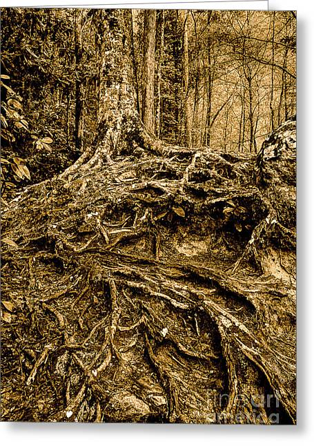Tree Roots Greeting Cards - Its Complicated Greeting Card by Michael Eingle