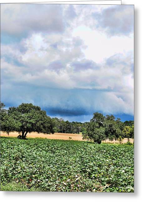 Georgia Cotton Fields Greeting Cards - Its Headed My Way Greeting Card by Jan Amiss Photography
