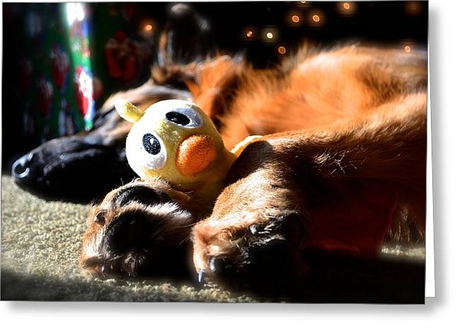 Toy Dog Greeting Cards - Its Just Ducky Greeting Card by Danielle Sigmon