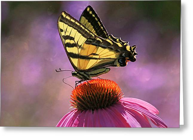 Swallowtail Butterflies Greeting Cards - Its Lonely At the Top Greeting Card by Donna Kennedy
