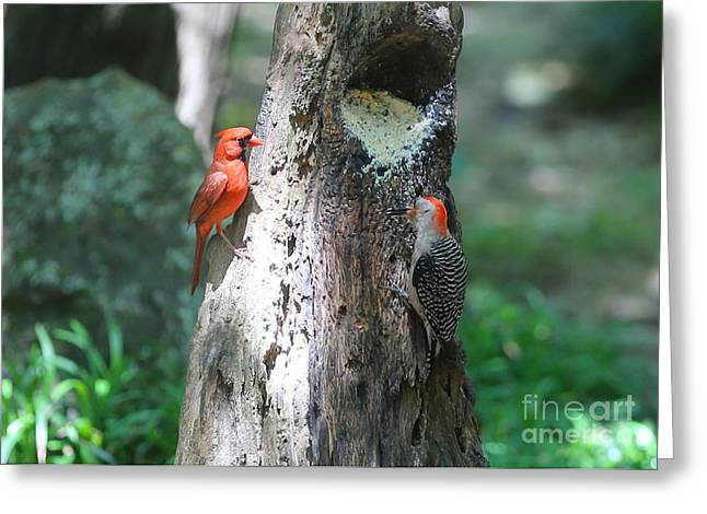 Feeding Birds Photographs Greeting Cards - Its Nice to Share Greeting Card by Carol Groenen