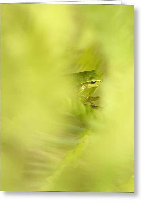 Tree Frogs Greeting Cards - Its Not Easy Being Green - Tree Frog Hiding  Greeting Card by Roeselien Raimond