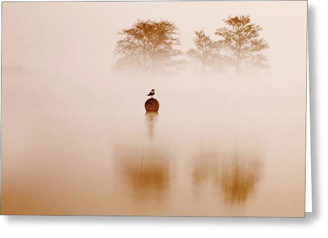 It's Oh So Quiet Greeting Card by Roeselien Raimond