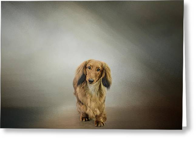 Dachshund Art Greeting Cards - Its Showtime Baby - Dachshund Greeting Card by Jai Johnson