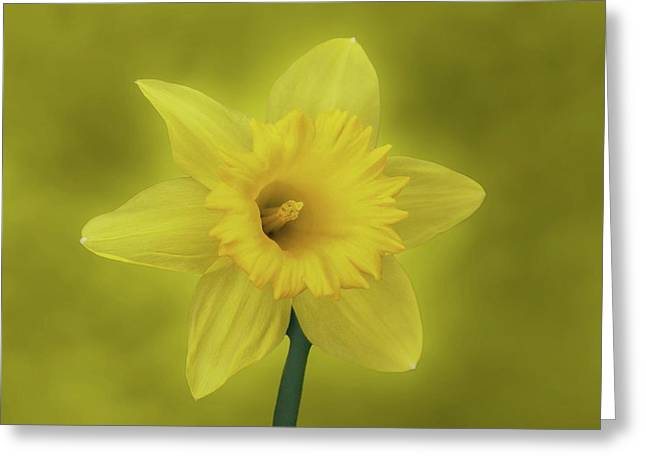 It's Spring Greeting Card by Sandy Keeton