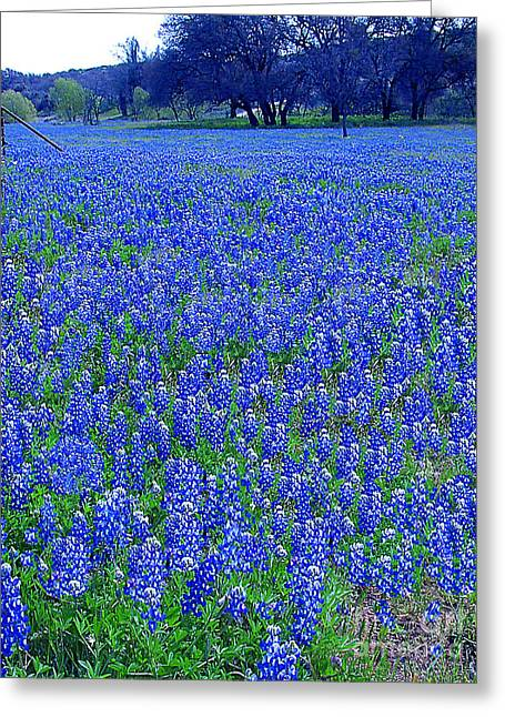 Wild Flowers Of Texas Greeting Cards - Its Spring - Texas Bluebonnets Time Greeting Card by Merton Allen