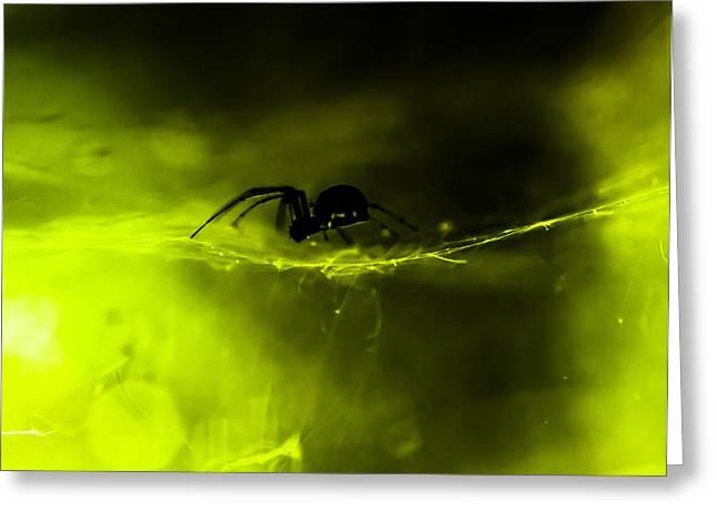 Bitsy Greeting Cards - Itsy Bitsy Spider Greeting Card by Toma Kulaksazov