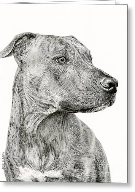 Breed Of Dog Drawings Greeting Cards - Ittie Bittie Pittie Greeting Card by Sarah Batalka
