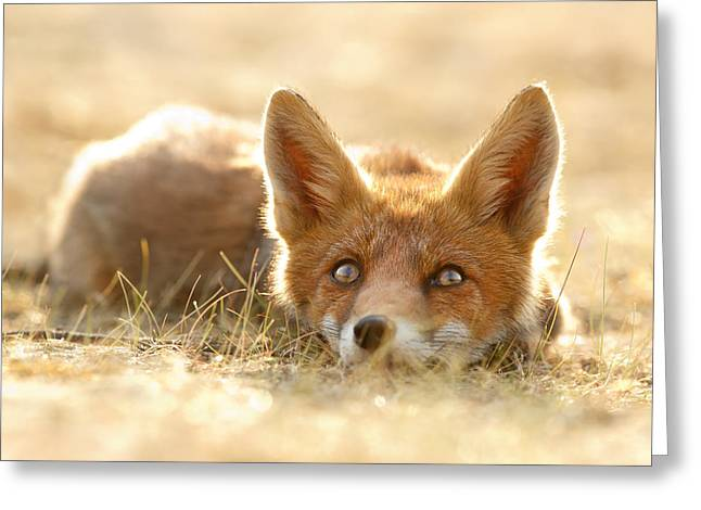 Little Fox Dreaming Of A Foxy Future Greeting Card by Roeselien Raimond
