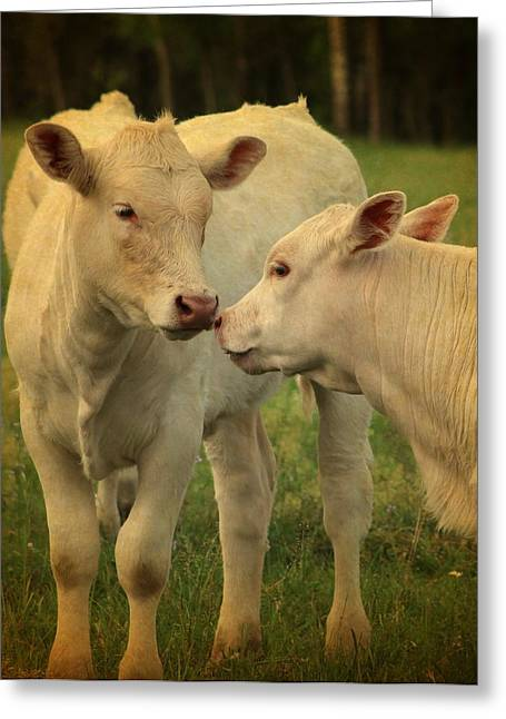 Moos Print Greeting Cards - Ive Got A Secret Greeting Card by Beth Wiseman