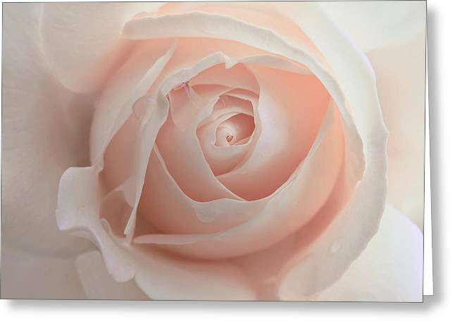Rain Drop Greeting Cards - Ivory Peach Pastel Rose Flower Greeting Card by Jennie Marie Schell