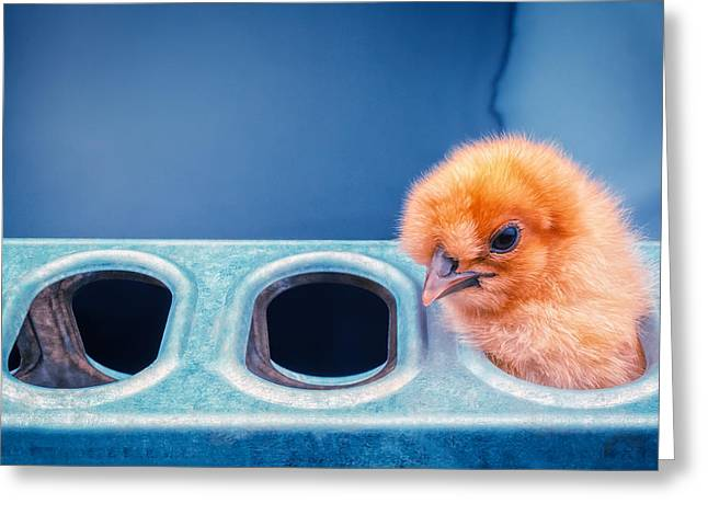 Chick Greeting Cards - Iz In Da Feeder. Greeting Card by TC Morgan