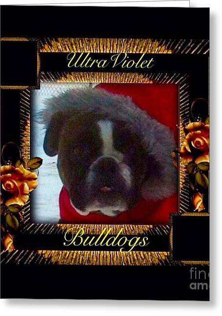 Puppy Digital Art Greeting Cards - Izzy 2 Greeting Card by Ultra Violet