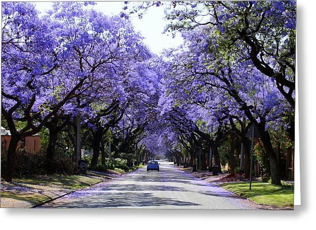 Jacaranda Greeting Cards - Jacarandas in Pretoria Greeting Card by Lene Pieters