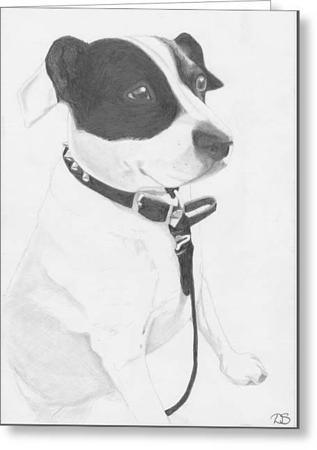 Staffie Greeting Cards - Jack Russell Cross Greeting Card by David Smith