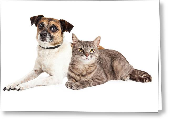 Jack Russell Terrier Dog And Tabby Cat Greeting Card by Susan Schmitz