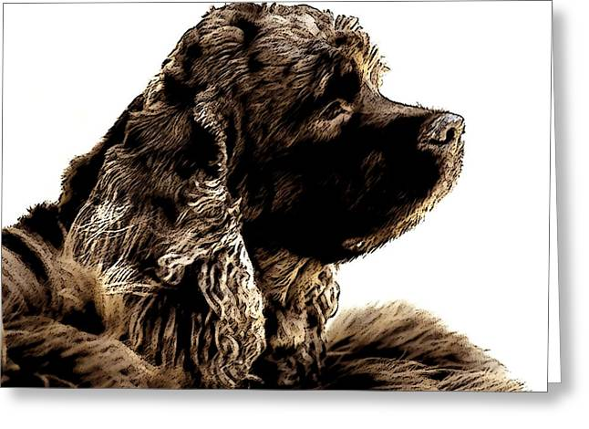 Spaniel Digital Art Greeting Cards - Jack Waits Greeting Card by Norman  Andrus