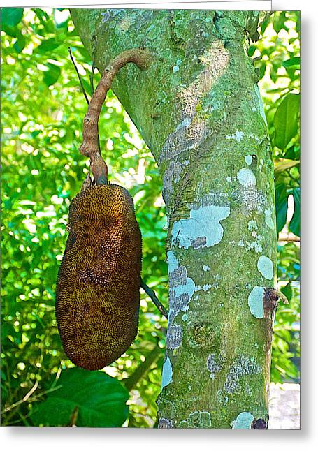 Jackfruit Greeting Cards - Jackfruit Tree in Rio de Janiero-Brazil Greeting Card by Ruth Hager