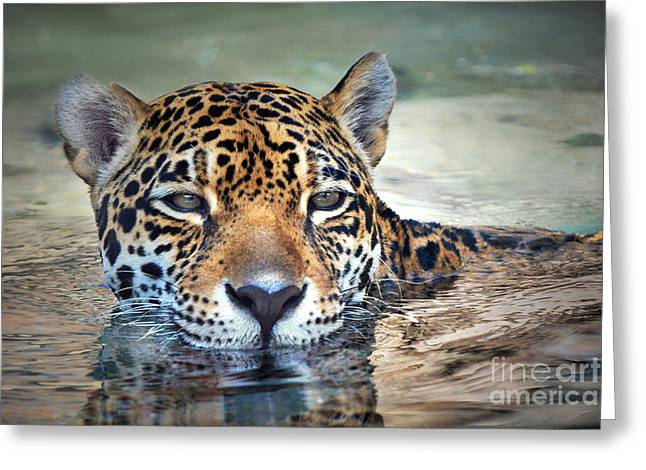 Cat Reflection Greeting Cards - Jaguar Cooldown Greeting Card by Dan Holm