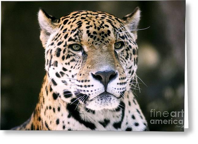 Audubon Zoo Greeting Cards - Jaguar Greeting Card by Scott Pellegrin
